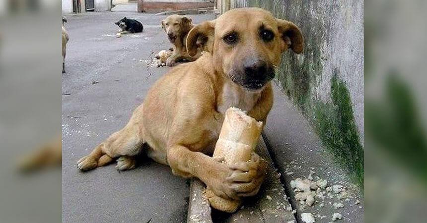 Resultado de imagen de foto perros callejeros
